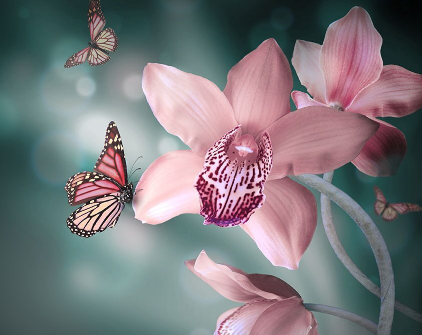 Красивое изображение цветов