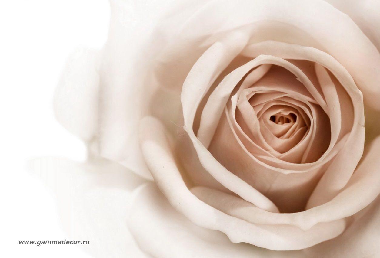 Фото цветов в бежевом цвете