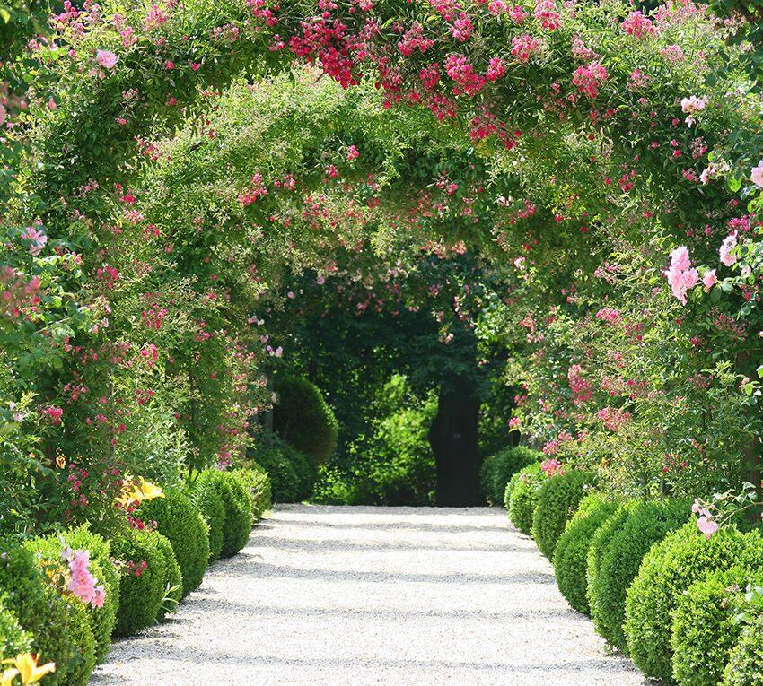 Комнатные растения Украина, цветы по каталогу Запорожье 91