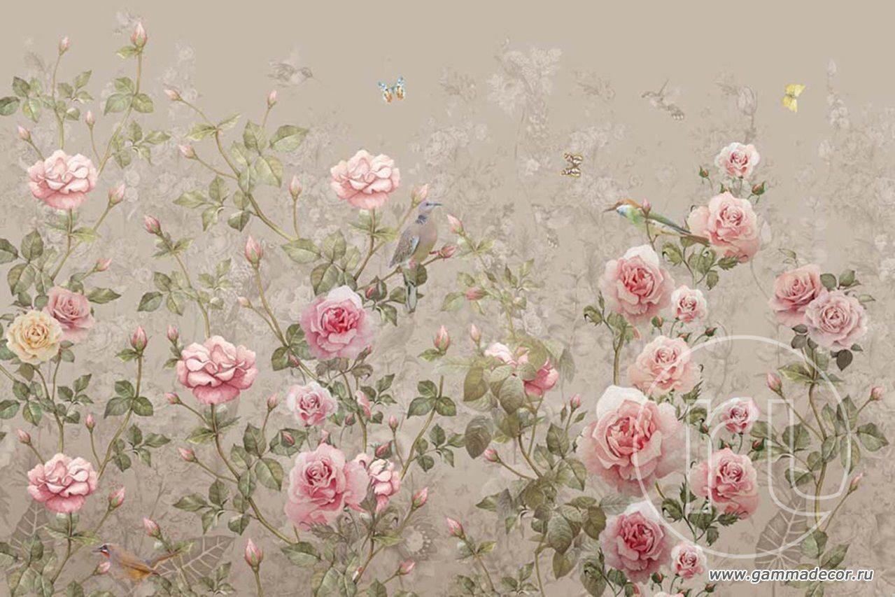 Комнатные растения Украина, цветы по каталогу Запорожье 10