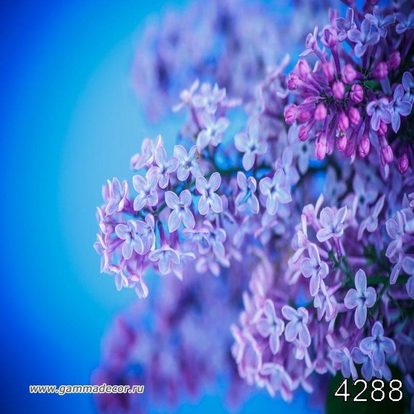 Комнатные растения Украина, цветы по каталогу Запорожье 97